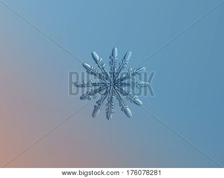 Macro photo of real snowflake: rare snow crystal with twelve thin arms and nice symmetry glitters on smooth pink - blue gradient background in cold light.