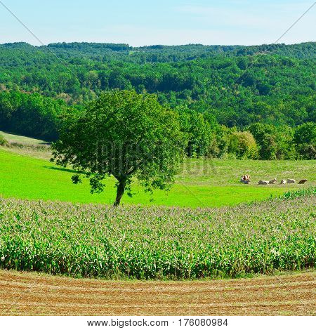Plantation of Corn in France in the spring