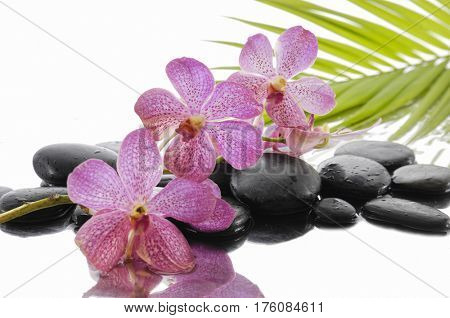 pink orchid and black stones with green palm leaf