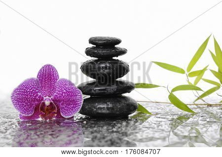 stacked black stones and bamboo leaf with pink orchid on wet background