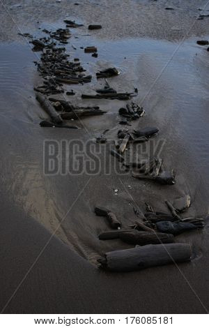Wood residues at the beach of Baltic sea