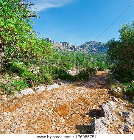 Winding Dirt Road in the Cantabrian Mountains Spain