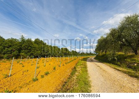 Dirt Road between Vineyards and Olive Trees in Italy