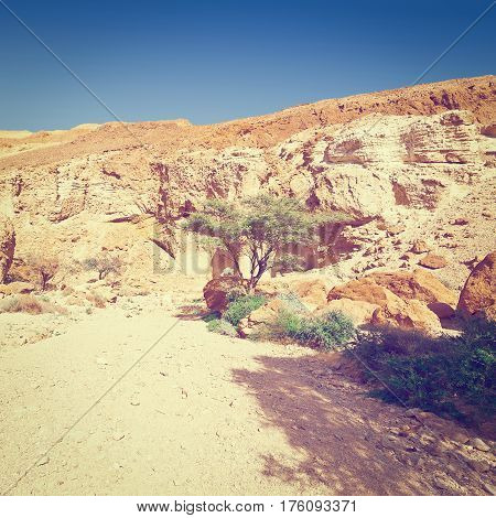 Rocky Hills of the Negev Desert in Israel Instagram Effect