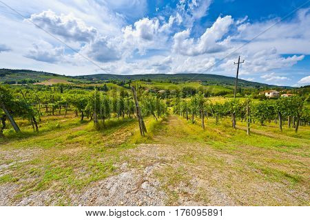 Vineyard with Ripe Grapes in the Autumn on the Background of Medieval Italian City