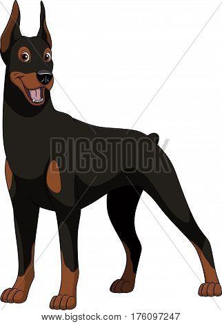Vector illustration, funny purebred dog, Doberman, on a white background