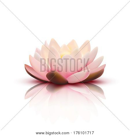 Isolated flower of lotus with light pink petals with reflection on white background 3d vector illustration