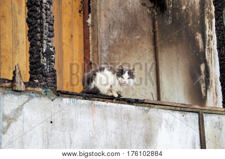 cat sitting, railing, gets wet, pet, home, wood, fire, burned, destroyed, destruction, danger, black, charred, old beams, texture, ash, burnt, coals, broken, destruction, empty, fall, fire, nobody, old, rough, rubble, ruin, structure, implications, broken