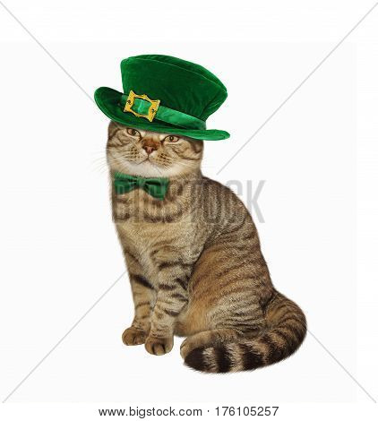 The cat in disguise for St. Patrick's Day. White bacground.