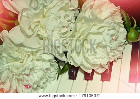 Bright colorful flowers peonies. White bouquet on the synthesizer.