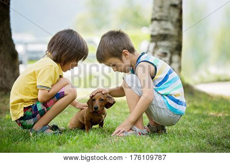Two Beautiful Preschool Children, Boy Brothers, Playing With Little Pet Dog In The Park
