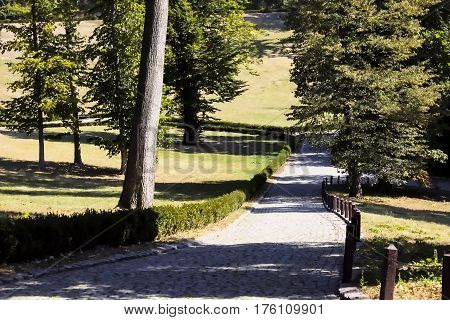 Path park grass garden lawn way tree nature background road.