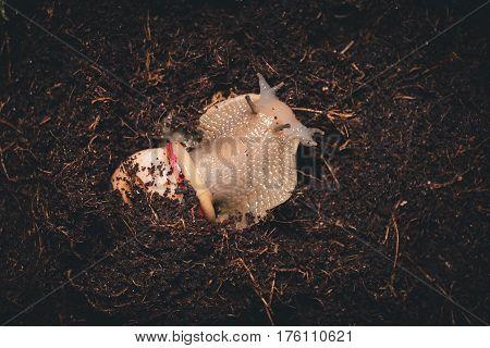 Beautiful snail in terrarium with wet coconut coir. Macro shot. poster