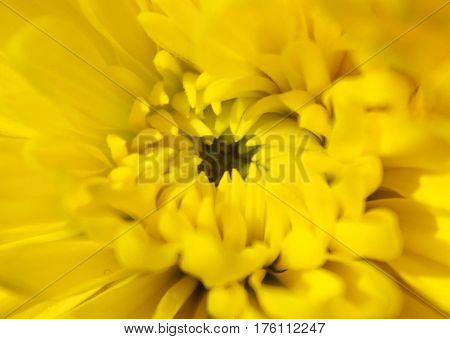 Macro image of the pistil of a yellow flower