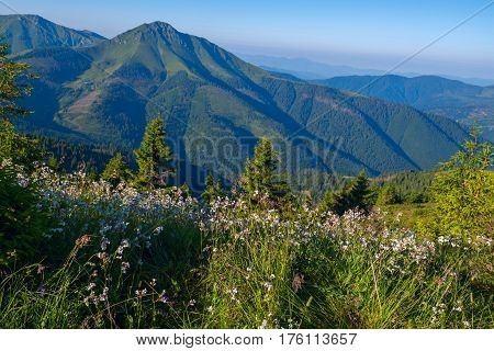 Alpine Meadow Covered With Lush Wildflowers