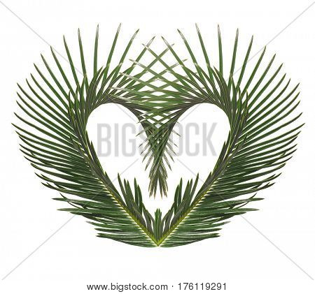 Palm leaves in the shape of heart isolated on white background