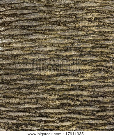 Close up of the bark of a palm tree