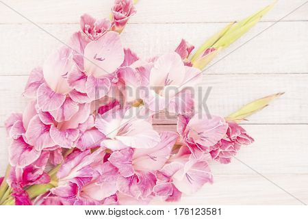 Pink gladiolus on a white wood background