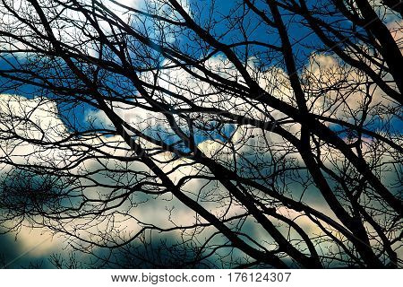 dramatic magical light through the branches of trees