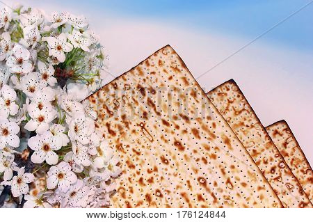 jewish holiday of Passover, branch of a blossoming tree and matzo