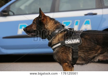 Italian Police Dog While Patrolling The City Streets Before The