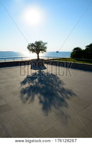 The tree and its long shadow on concrete pavement