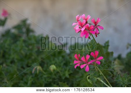 Beautiful pink flower in the middle of Israel.