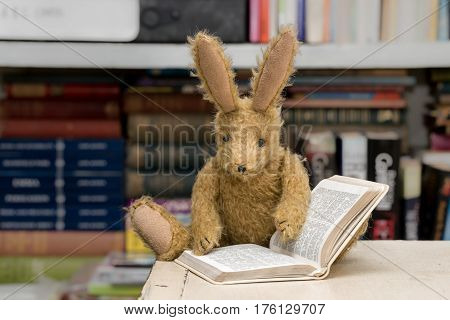 Vintage Toy Rabbit Reading With Book Background.