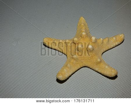 Beauty yellow starfish on a gray backgroundn