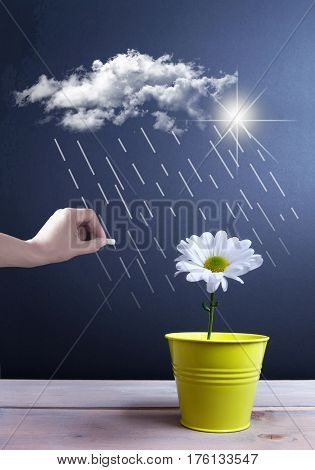Spring daisy inside a pot with clouds and rain being sketched on a chalkboard