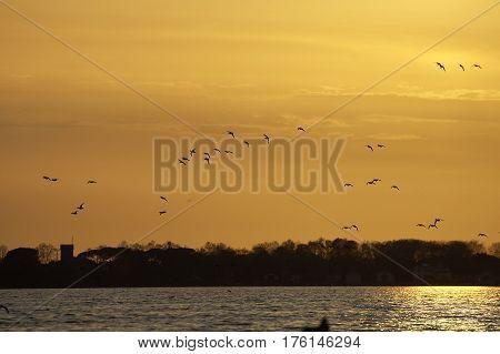 group of anas querquedula against sunset in massaciuccoli lake
