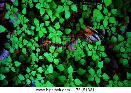 nice floral green leaves composition and lighting
