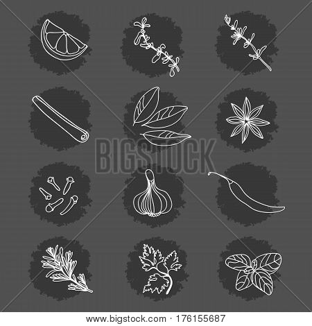 Spices and Herbs. Collection. Lemon, marjoram, thyme, cinnamon, bay leaf, star anise, cloves, garlic, pepper, rosemary, parsley, basil.