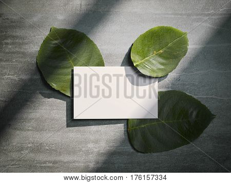 Three fresh tree leafs and white busines card. 3d rendering