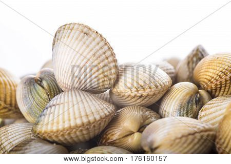 Cockles Isolated On A White Background