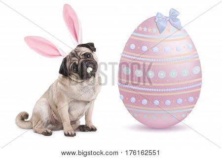 funny pug puppy dog with bunny ears diadem sitting next to big pastel pink easter egg isolated on white background