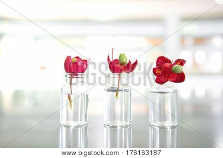 three summer red flower and vial in science laboratory background