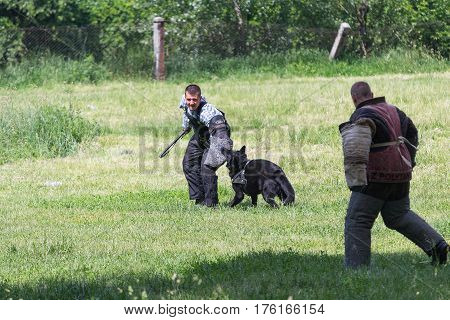 Kiev Ukraine - June 05 2016: Training of a service dog in the club of dog breeding