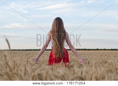 Girl with long hair standing with her back to the wheat field outstretched hands and admiring the evening sky