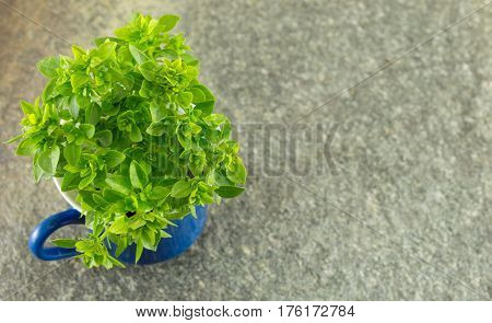 Basil In A Cup On Stone Table