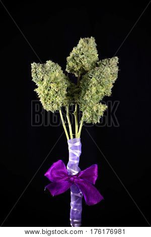 Small bouquet of fresh cannabis flowers (Mangolope marijuana strain) trimmed and wrapped in purple ribbon, isolated over black background