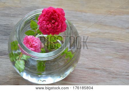 red and pink pygmy rose on water in glass bottle