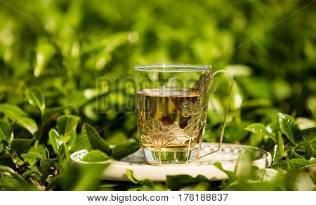 Glass Cup Of Tea On The Field