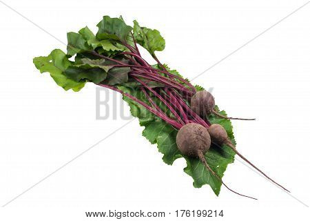 Beets with green tops on horseradish sheet