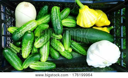 Box with cucumbers, courgettes and squash in summer vegetables