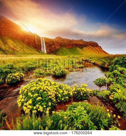 Lovely view of blooming green field in sunlight. Dramatic and gorgeous scene. Popular tourist attraction. Location place famous Seljalandsfoss waterfall, Iceland, Europe. Discover the world of beauty.