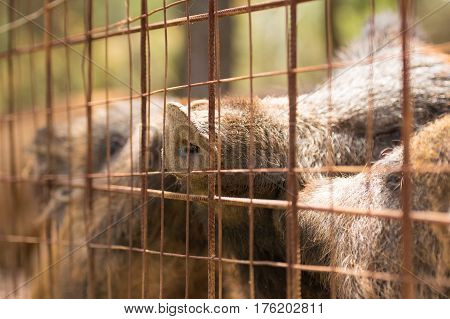 Caged animals. A close up look of wild boars inside a cage.