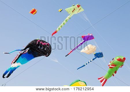 Various colorful kites flying in blue sky. Stingrays, Koi fish and others.