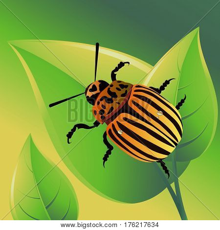illustration nature potato colorado vector animal beetle