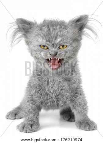 Evil kitten on the white background